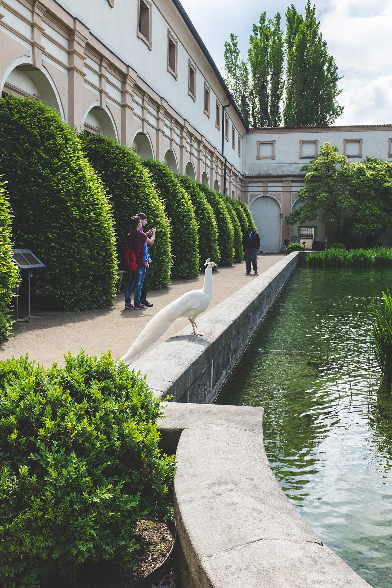 Wallenstein Gardens peacock